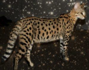 cat-body