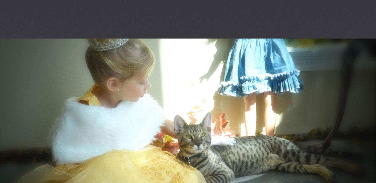 kitten-care_banner